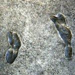 footprints tanzania